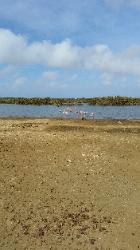 Scenic View of Eastern Bonaire Island - Flamingos in a Reserve on Route to Lac Bay Beach