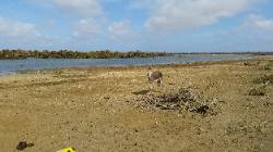 Scenic View of Eastern Bonaire Island - Donkey in a Reserve on Route to Lac Bay Beach
