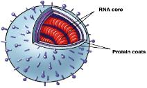 Influenze Virus Cells Image